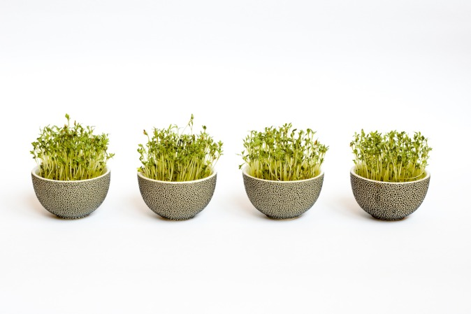 Four traditional dotted easter flowerpots with green sprouted corn
