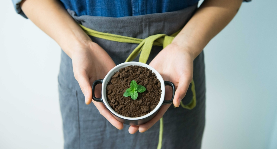 Canva - Person Holding Cup With Green Plant