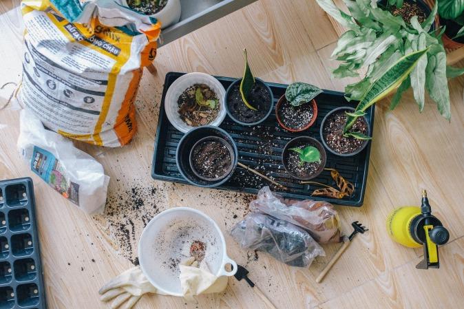 Canva - Green-leaved Plants