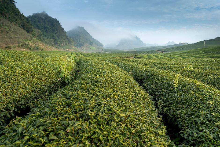 Canva - Green Plantation