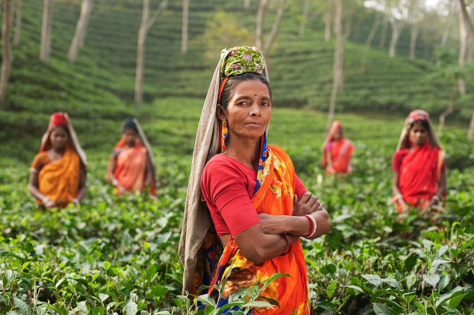 Canva - Women in a Tea Plantation in India