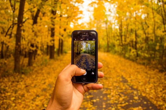 Canva - Taking a Photograph of an Autumn Forest