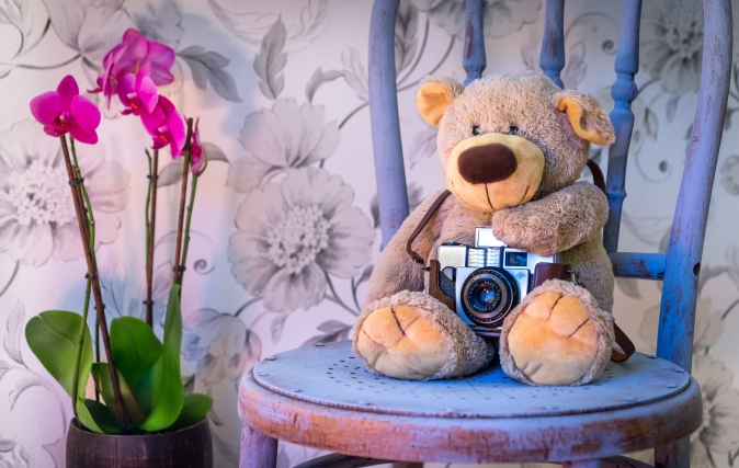 Canva - Teddy Bear Holding a Camera