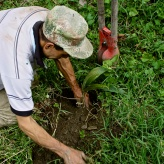 The Adventures of Pili Tree Planting Campaign